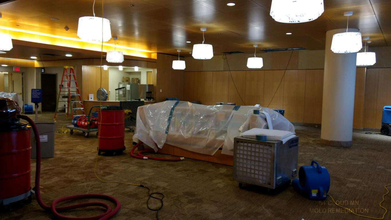 ST CLOUD MN MOLD REMEDIATION